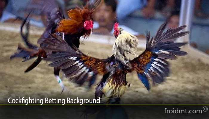Cockfighting Betting Background